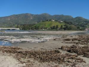 Beach-wrack & lagoon-foam (L.Johnson 2/10)