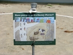Snowy Plover sign designed by the kids (L. Johnson 5/27/12)