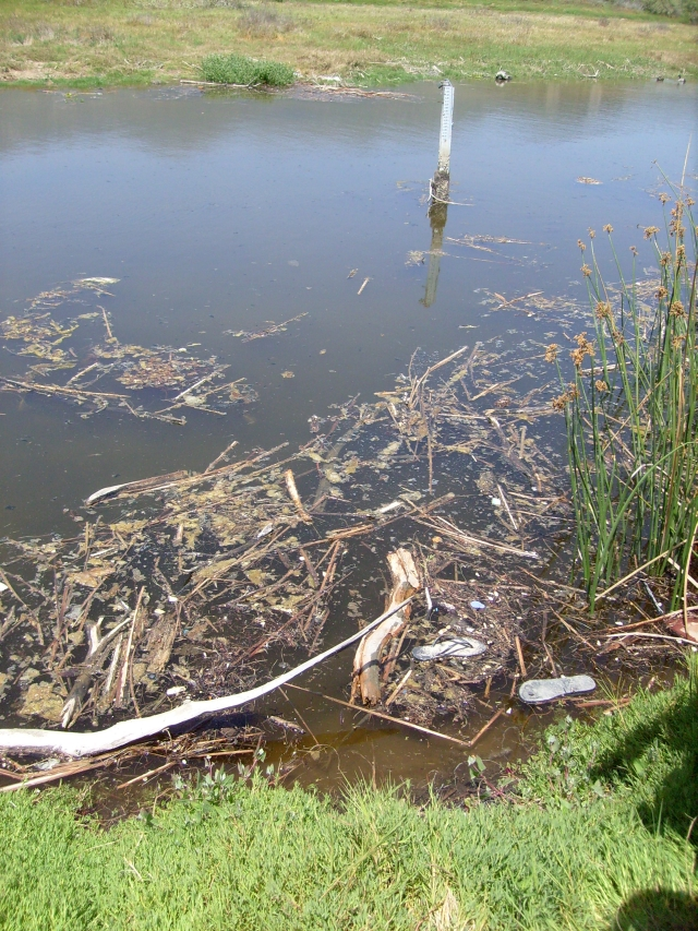 Midway south channel - typical detritus situation in back channels (M.Horns 5/19/12)