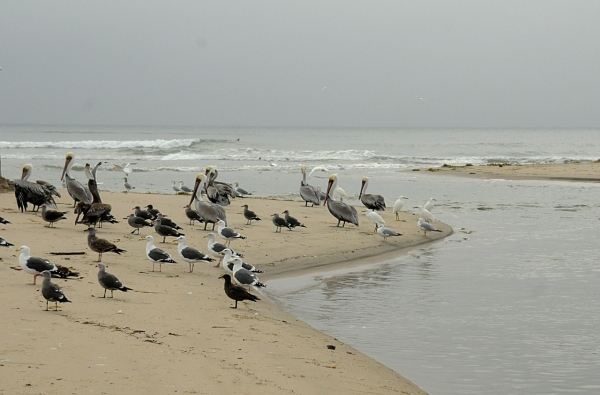 Birds at the Breach (J. Kenney 12/3/12)