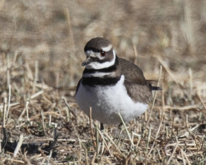 Killdeer, Scott Baker