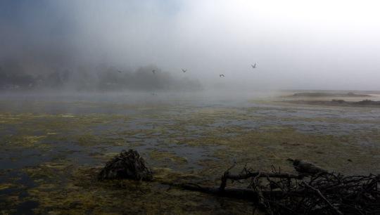 Foggy lagoon morning (C. Bragg 8/25/13)