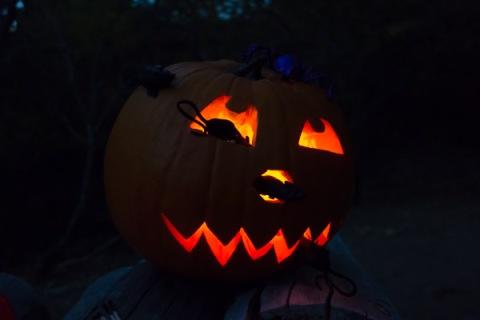 """""""I'm lost in a daydream"""" pumpkin (C. Bragg 10/26/13)"""