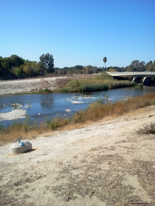 Birds in the Los Angeles River (L. Johnson 11/9/13)