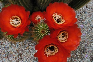Pitzer plant id gallery