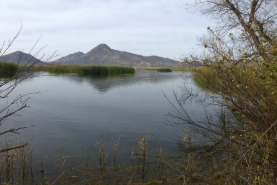 Probably the only pond without birds (L. Johnson 2/15/14)