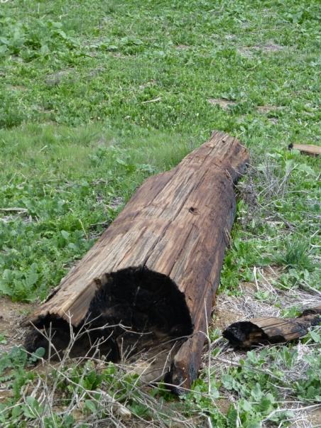 Burnt log (C. Almdale 4/12/14)