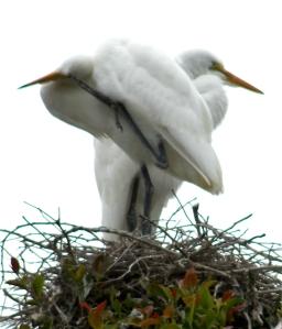 EgretSiblings