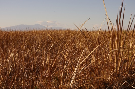 Reeds and mountains (D. Roberts 2/8/15)
