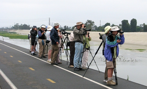 Birders perched on the bank of the LA River. C. Almdale 2012