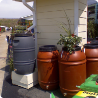 Typical Rain Barrels from Rain Barrel Int'l