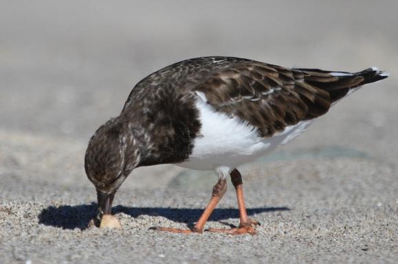 Mystery Bird (J. Waterman 11/22/15)