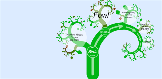 The Avian Tree of life - OneZoom.org