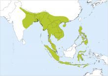 Home range of Red Junglefowl (Handbook of Birds of the World)