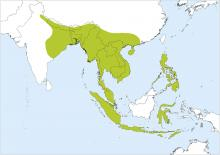 Home range of Red Junglefowl (Handbook of Birds of the World)
