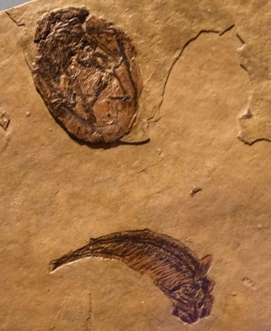 Pterosaur egg (top) & fish (Doug Waterman 8-10-16)