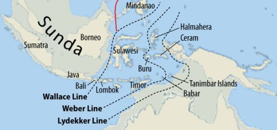 Wallace Line - Bali is eastern end of Red Junglefowl range (Wikipedia)