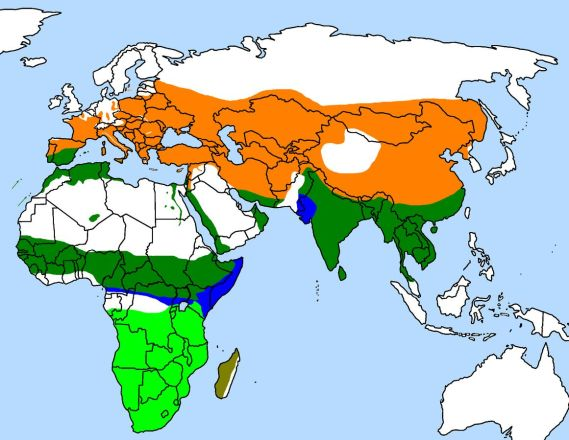 Range of the Hoopoe (Wikipedia)