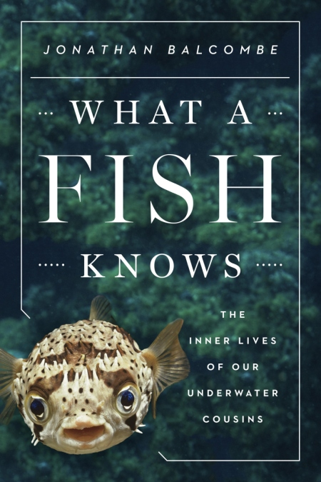 The cover features a pufferfish