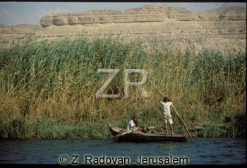 Papyrus on the Nile (Zev Radovan)