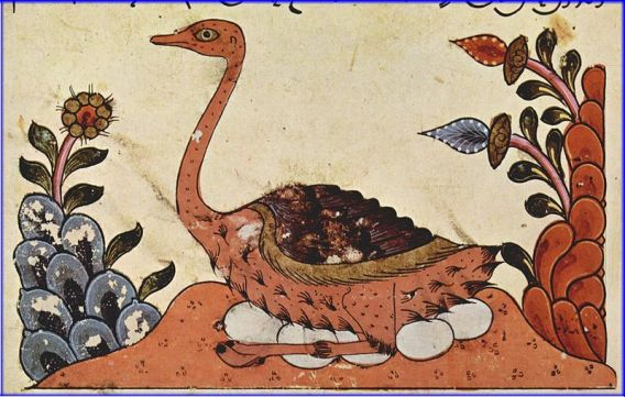 Arabian Ostrich, from The Book of the Animals by al-jahiz, Syria, 14th Century (Wiki Commons)