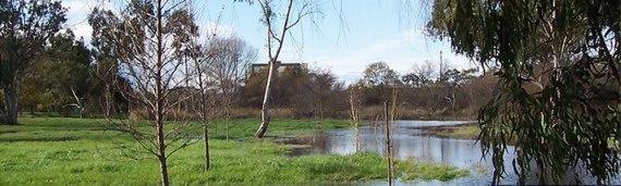 madrona-marsh-banner