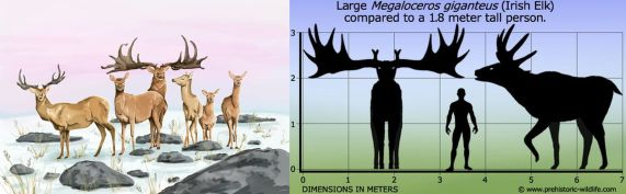 Irish Elk Group (Tabitha Paterson, TwilightBeasts) Comparison (prehistoric-wildlife.com)