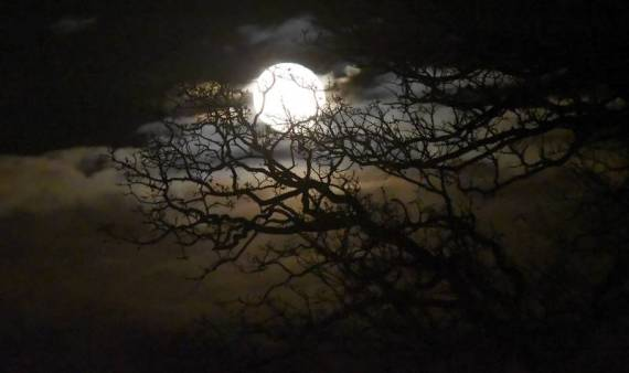 Full Hunter's Moon (Laura Stoeker, Daily Herald) http://www.dailyherald.com/article/20151030/news/151039910/