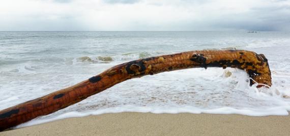 Surf log (C. Bragg 2-26-17)